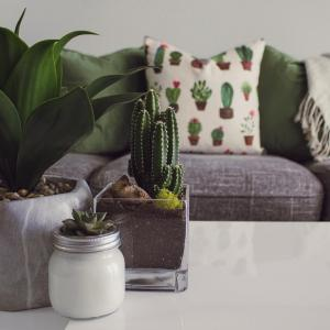 The Purifying Effect of Plants on the Indoor Environment
