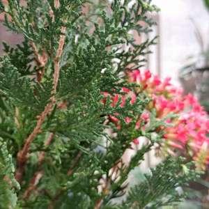 请问大家这个是什么花?画圆圈的那个是它开的花吗?