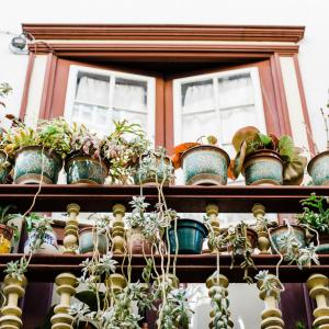Pick the Right Pots for Your Plants!