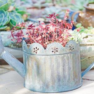 """防止花卉短期内缺水的""""小妙招"""""""