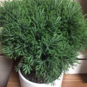 这是什么植物啊?