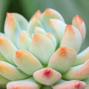 给花吃个鸡蛋,长得嗷嗷旺,叶子绿得冒油!