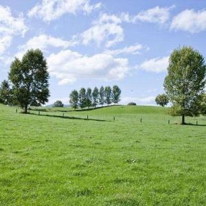 草坪类病害:草坪红丝病