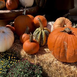 Allotment jobs for October