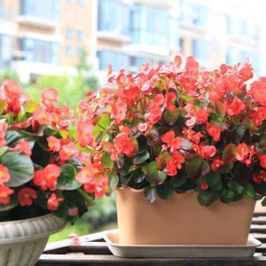 花卉的生长和开花有什么规律性