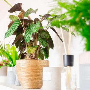 10 Houseplants That Can Survive in Darkest Corner