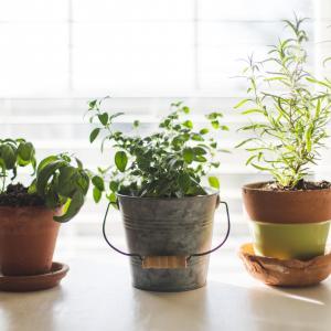 9 Plants Easy to Regrow Indoor