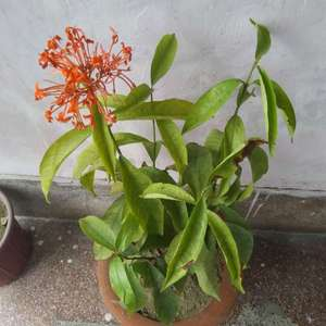 Does anyone know which plant is this one?