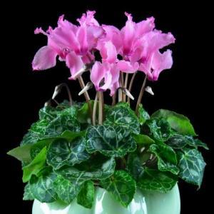 花卉对光照有哪些要求