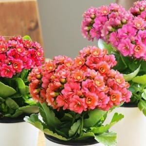 花儿为什么会呈现出万紫千红的色彩