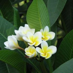 Flower propagation