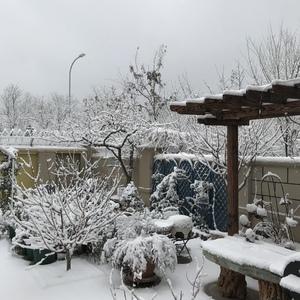 今年的第一场雪来的太美!