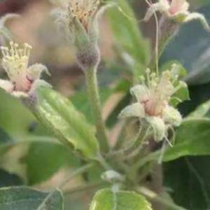 用什么药促进花芽分化