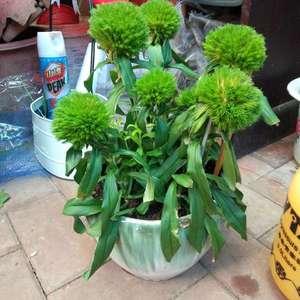 这是什么花?