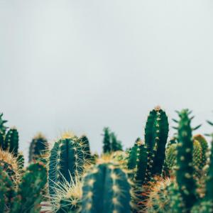 How to Grow Cacti Indoors