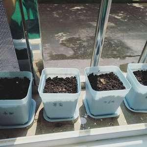 这几天栽花种子,还能发芽吗?