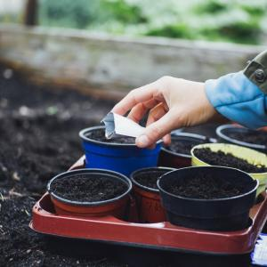 Allotment jobs for March