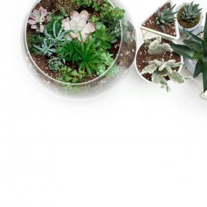 Create your mini bottle garden