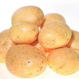 Potatoes (Solanum tuberosum) do well as an annual food crop in Department of Agriculture plant hardiness zones 1 through 7. While they are commonly grown in-ground by home gardeners, they can be easily and successfully grown in containers. Container-grown potatoes can be grown year-round, since they can be moved indoors so long as light requirements are met. To successfully grow potatoes in a bucket, choose your potato variety carefully. You also need to meet the growing requirements for potatoes.   The most important requirement for your bucket is that it be made of material suitable for growing food. Food-safe plastic or garden-safe wood are the ideal materials for your bucket. Avoid metal as it can corrode over time and affect soil nutrition. Your bucket must also have good drainage, as sodden soil is extremely harmful to plants. Drill drainage holes in your bucket if it does not already have them. The size of your container is also important. Potatoes do well in large containers, so plan on 2 1/2 gallons of growing space per potato plant. Ensure that the container is at least 1 foot deep.  Preparing the Soil and Growing Conditions Potatoes enjoy sandy, acidic soil that is nutrient-rich. Use a mix of compost and nutrient-rich potting or garden soil to fill your container. Place a layer of gravel or broken pieces of Styrofoam at the bottom of your bucket. This will help your container garden drain better. Fill your bucket almost to the top -- 1 inch below the rim -- with the compost and soil mix. Potato plants enjoy full sun and moist, but not sodden soil. Container gardens are more susceptible to dehydration during summer months. Keep your soil evenly moist, neither soaked nor dry to touch. Place a large dish under the bucket, keeping it filled with water. The plants and soil will absorb water as needed. This method also helps reduce the level of nutrients washed away during watering.  Planting Potatoes To plant potatoes, you must start by chitting potatoes. This