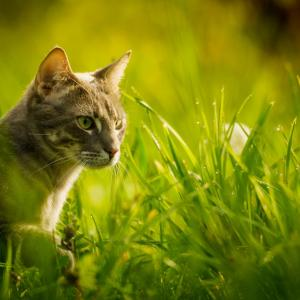 Cat Grass & How to Grow