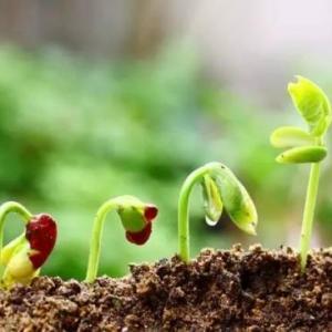 植物缺肥症状及对应的花肥沤制方法:薄肥淡施