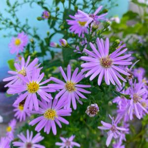 10 Best Fall Plants and Flowers to Beautify Your Yard This Season