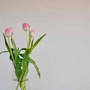 March Lucky Flower—Tulip