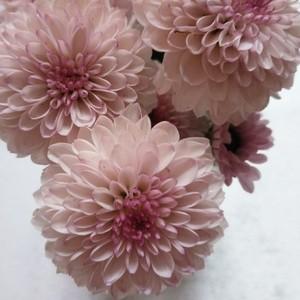 请问这是什么⊙∀⊙?花??