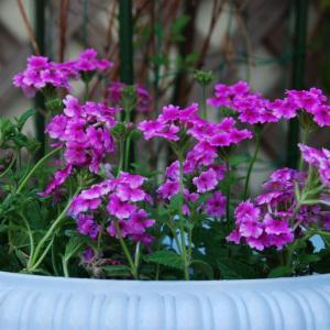 花卉播种有哪些步骤,六个步骤教你播种