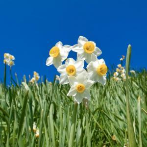 Best Low-Maintenance Flowers for Garden