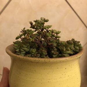 砍头23天,感觉扦插的枝条状态很好,气温很低,不知长根了么?