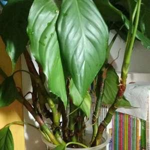 这两个是什么植物呀?