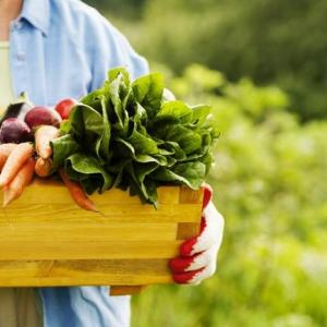 When to Plant a Vegetable Garden in Missouri