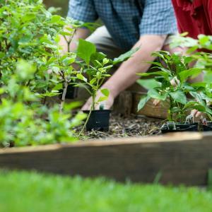 7 Ways to Make Fertilizer at Home