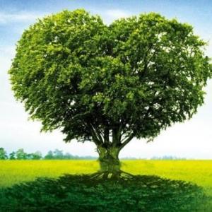 关于植物的10个冷知识,你知道多少