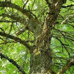 Agradeceria que me ayuden a conocer el nombre de este árbol. Gracias!