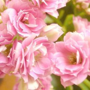 冬季养什么花?