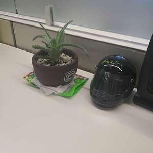 Alguien sabe que planta es??