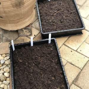 播种的季节到了 樱桃小萝卜 羽衣甘蓝 和生菜沙拉都冒芽啦 最近气温适宜继续播种育苗 PS:大爱萌叔 特别治愈的园艺节目