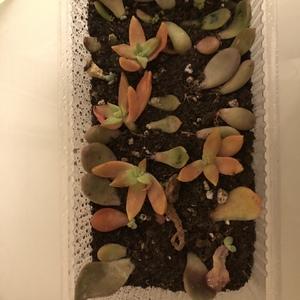 这些小东西,根也好,芽也好,还好还好~