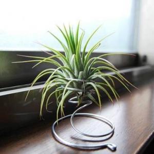懒人植物推荐:8种超级好养的植物,你越懒它长得越好