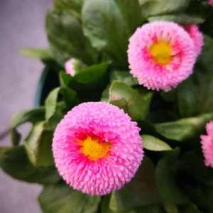 春暖花开,万物生长,我的小鲜肉和小雏菊❤