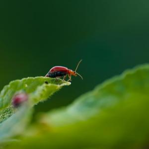 Several Ways to Control Aphids