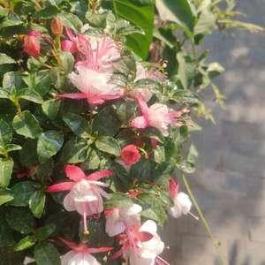 这花叫什么名字