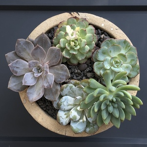 Did my first succlent arrangement today. Need to get some fillers to dress up the empty tops.