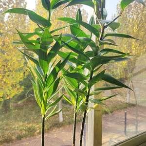 买回来一星期,叶子从底部开始干枯变黄,室温8度左右,没浇太多水