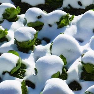 花草树木怎样过冬的知识