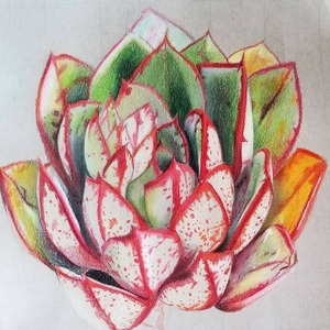 Follow my Instagram cactibrush to see my succulent artwork.
