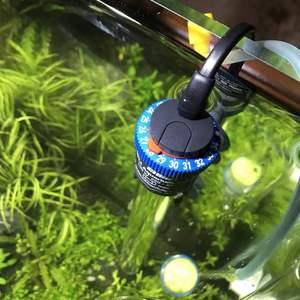 教训:水质稳定的时候,千万不要随便加药。系统很轻易就崩溃了。 前几天全缸鱼白点,作为新手有点慌乱了,加入药,鱼是治好了,但是水质平衡打破了,紧接着绿藻,鹿角藻,钢毛藻都起来啦!水体发绿变浑!刚好没两天的白点又卷土重来! 逛了好多贴吧,最后总结是:新水入缸,新水要跟老水保持不超过两度的温差;鱼缸缺乏恒温设备,温差大很容易诱发起白点。 这次不敢贸然下药了,采用物理疗法治白点病:把温度提高到二十八摄氏度。保持两天了,观察鱼身上的白点基本退去。继续保持一段时间,等虫卵孵化后再死亡,可以比较彻底的祛除白点病。正在治疗中… 对付藻类:缩短光照时间,调暗灯光亮度。换水四分之一加入除藻剂(之前最好移出缸内观赏螺和虾,还有食藻鱼类)我没移出,实在太多了,抓不到。最后损失三条蓝眼大帆,近20只虾。除藻剂效果明显,图二可以看到部分鹿角藻已经发红(黑-红-灰-白)到白就死了。四天了吧,图一可见水质已经改善变清,希望赶紧空气缸吧。 下图是除藻剂和白点药。白点药超级好用,一晚上鱼身上白点就全干净了,切记精准用量,隔离用药!