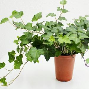 怎样判断植物服盆成功了
